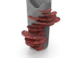Tinder fungus V3 3D model
