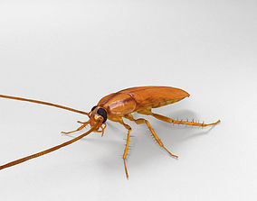 3D model Cockroach High Detailed