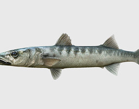 animals barracuda fish 3d model