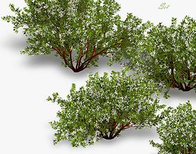 3D Bush Cherry