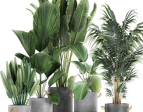 3D Houseplants in a pot for the interior 728