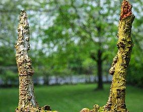 White Tree Stump Broken 3D asset