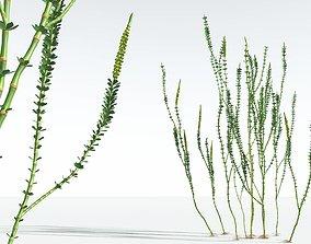 EVERYPlant Hollow-Stemmed Sphenophyllum 12 --16 Models--
