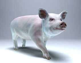 Pig for 3ds Max animated