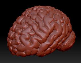 Anatomical human brain model