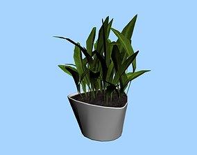 Decorative Plant 2 3D asset