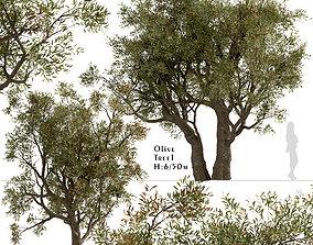 Set of Olive or Olea Europaea Trees - 2 3D model