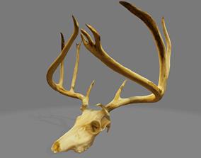 3D model Buck Skull 1