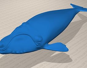 3D Northern Right Whale - Eubalaena Glacialis - Adult Male