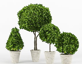 flowerpot 3D Collection of plants