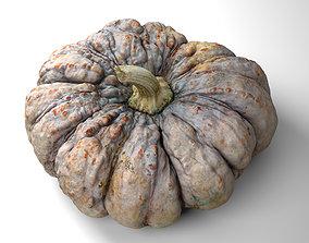 3D asset Warty Pumpkin