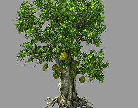 3D Hundred Forests-Plants-Jackfruit 21