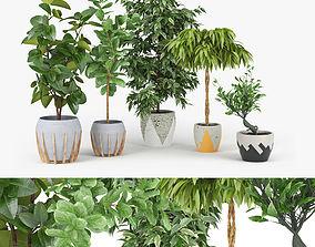 Ficus Set 3D