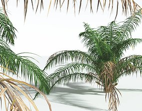 EVERYPlant Seashore Palm 02 --14 Models-- 3D