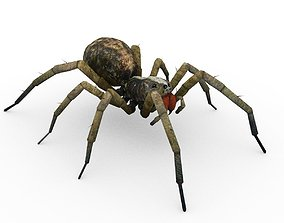 3D model Wolf Spider Animated