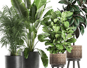 3D Plants in a flowerpots for the interior 861