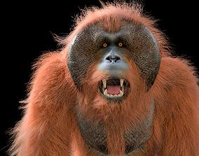 3D Orangutan Rigged Hairs