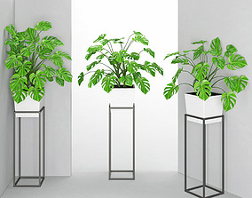 3D Houseplant 38 wall Collisions