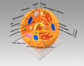 dna Animal Cell 3D model
