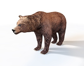 Grizzly Brown Bear Rigged 3D model