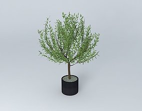Oak stabilized plant green ref CHVAR400 3D model