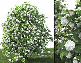 3D model Viburnum guelder-rose