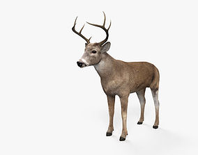 3D model White-Tailed Deer HD