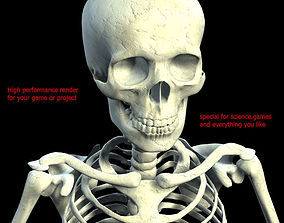 3D model low poly skeleton