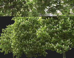 3D model Chestnut-tree 03 H13-16m
