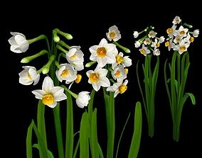 Flower Narcissus Tazetta 3D model