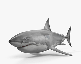 3D model Great White Shark HD