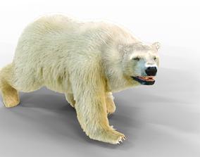 White Bear Fur animated 3D model