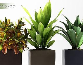 3D Plants 77