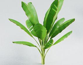Banana tree leaf nature 3D model