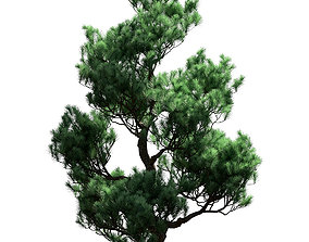 3D Decorative pine tree