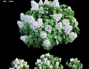 Hydrangea Plant set 31 3D