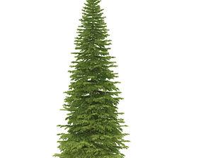 Spruce height 5 metre 3D