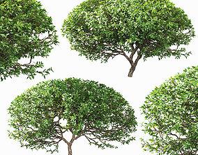 Spherical bushes - 2 models