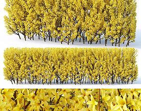 Forsythia Nr3 - hedge H120 cm 3D