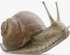 Snail Rigged 3D model
