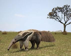 3D model Giant Anteater