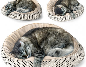 3D model kitten Sleeping Cat