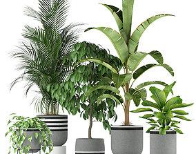 Plants collection 212 3D