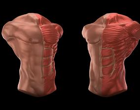 3D Chest Anatomy