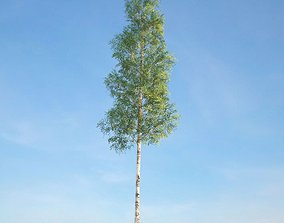 3D model Green Leafy Ulmus Tree
