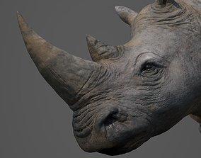 Rhinoceros Head 3D asset