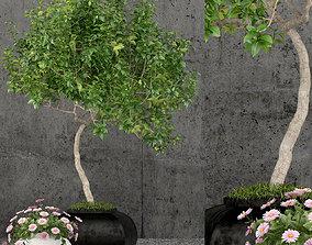 Plants collection 61 3D model