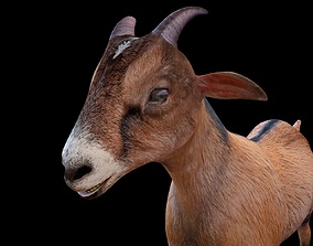 3D model Brown Goat Rigged