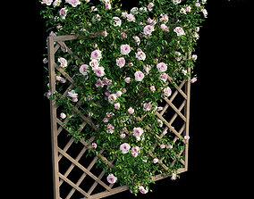 3D Rose plant set 12