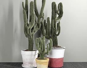 3D model Set of Three Cactuses Carnegiea
